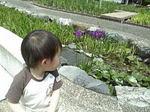 umi_hana